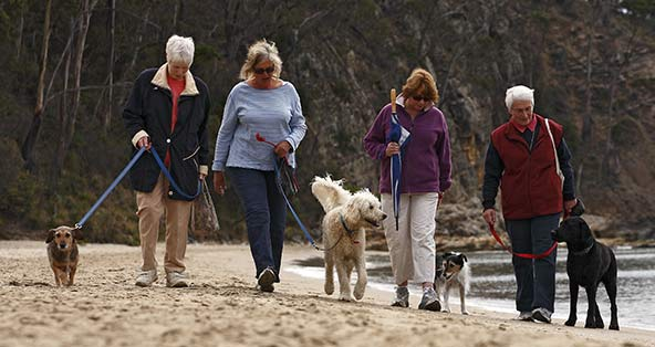 Group of women walking their dogs